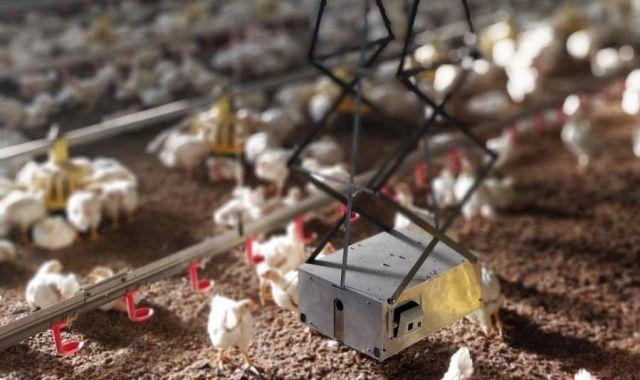 Robots e imágenes 3D para impulsar la producciónavícola